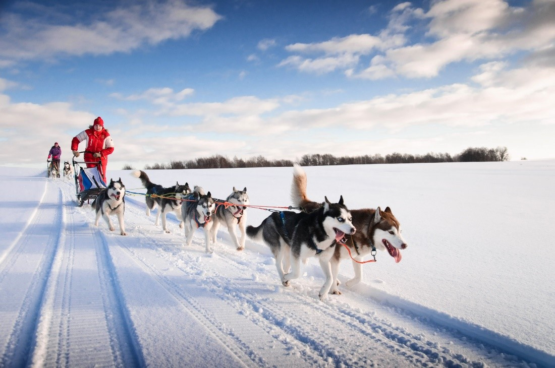 Dogsled ride in Iceland
